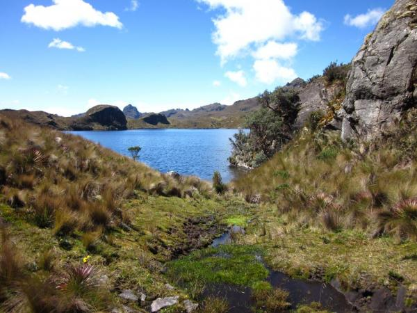 Lovely Laguna in Cajas National Park