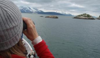 Looking at sea lions in Alaska
