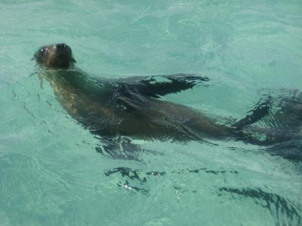 Sea lion near San Cristobal Island