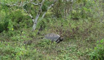 Hiking in search of giant tortoises at La Galapaguera on San Cristobal