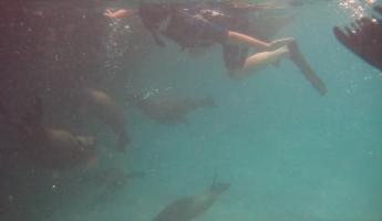 Snorkeling at Espanola