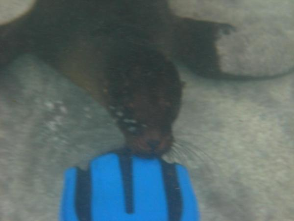 The sea lions liked to nibble on our flippers to get us to play with them!