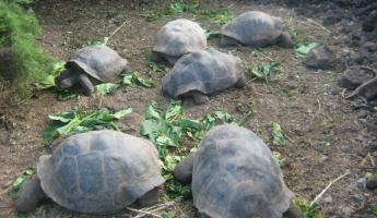 See the Galapagos Tortoise at the Charles Darwin Center, Santa Cruz Island