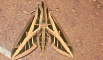 Even the moths are cool here!