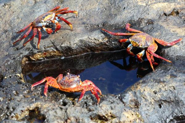 Crabs on the edge of a tidepool