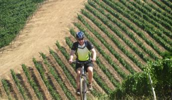 Biking up a hillside vineyard on a Chile tour