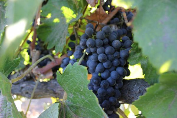 Taste the wines of the Colchagua and Santa Cruz Valleys on a Chile Wine tour