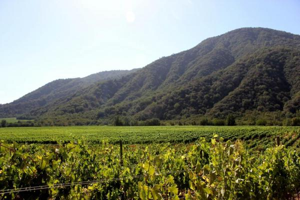 Beautiful vineyards await on a Bike and Wine tour of Chile;