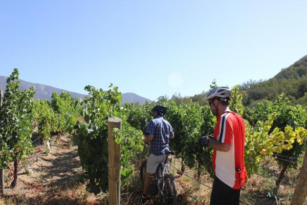 Stopping to examine the fruit on a Chile Bike and Wine Tour