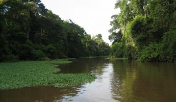 A jungle river in the rainforest