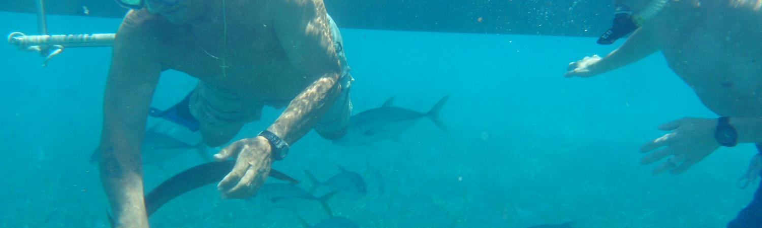 Snorkeling with nurse sharks in Shark Ray Alley