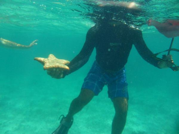 Snorkeling with star fish!