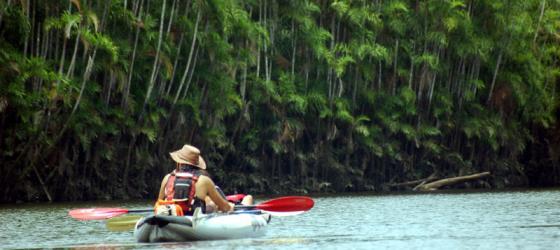 Rainforest Birds Flying 10 Best Amazon Tours &...