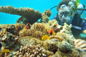 Uncover the hidden secrets of the Great Barrier Reef