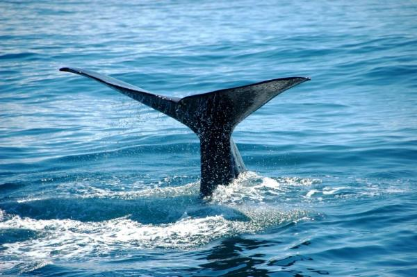 The ultimate marine experience of whale watching