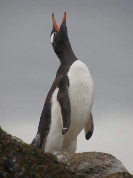 Gentoo: I've got something to say.