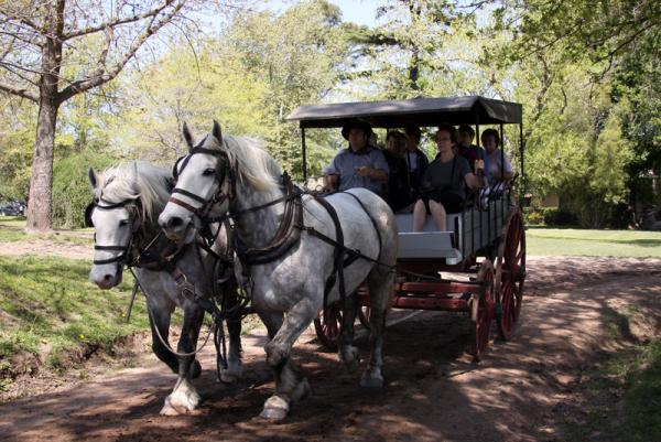 Horse drawn carriages are available for exploration