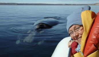 Experience whales up close during a whale watching boat tour around Chiloe Island