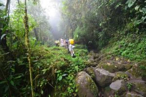 Colombia rainforest hike
