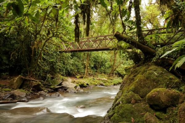 Hike the rainforest trails in La Paz Waterfall Gardens