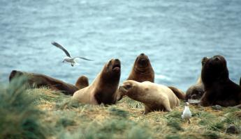 Hear the barks of sea lions and the cries of gulls on your Falkland Islands tour