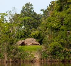 Along the Iwokrama River