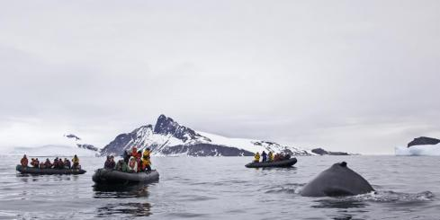Enjoying some whale watching on an Antarctica cruise