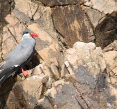 Bird perched upon the rocky cliffs