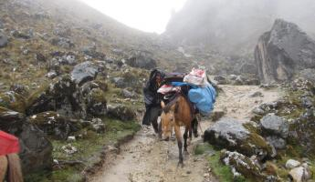 Our donkey walks along the Cachiccata Trek