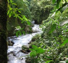 River near Arenal