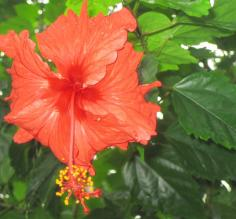 Flowers of Costa Rica