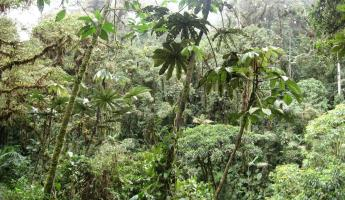 A walk in the cloudforest