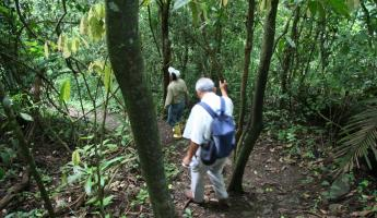 Hike at Churute Reserve, listen to the Howler monkeys!