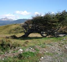 The power of wind, Tierra del Fuego