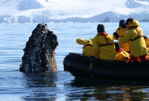 Encountering a curious humpback