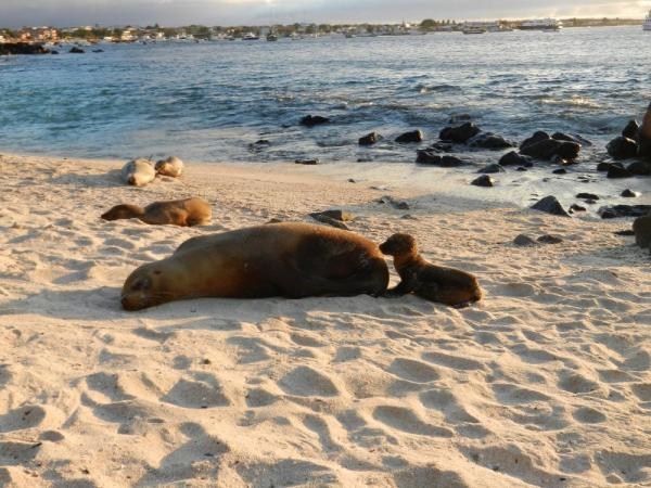 sea lions on the beach at San Cristobal
