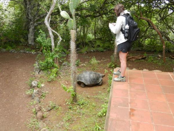 viewing tortoises on San Cristobal