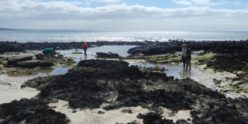 Exploring tidal pools for critters in the Galapagos