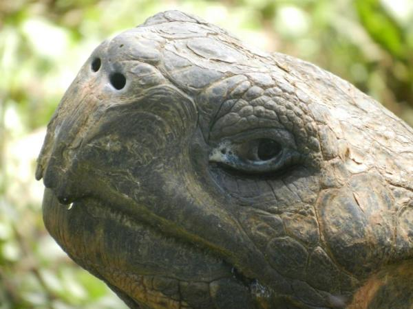 wise tortoise eyes