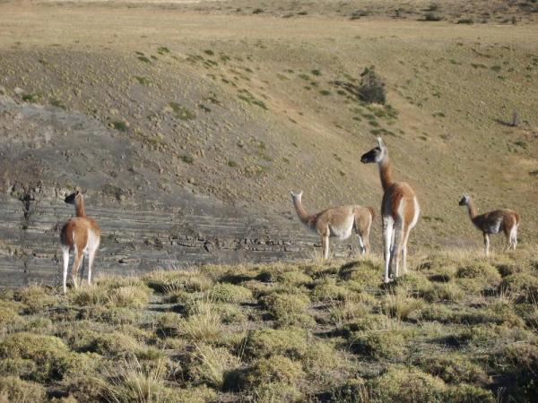 View of the wildlife in Torres del Paine