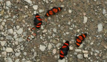 Beautiful butterflies in the Manu border zone