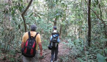 Jungle trail to Cocha Otorongo