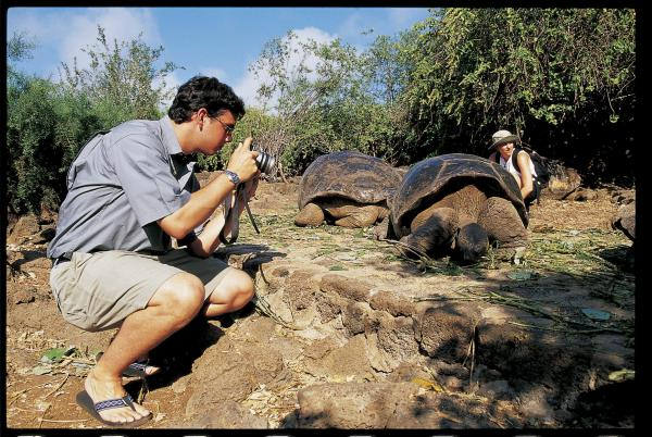 Tortoise being photographed