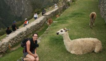 Talking with the llamas at Machu Picchu