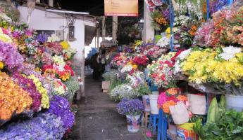 Cusco Market: Flower Section