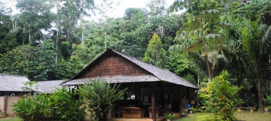 Welcome to Atta Rainforest Lodge
