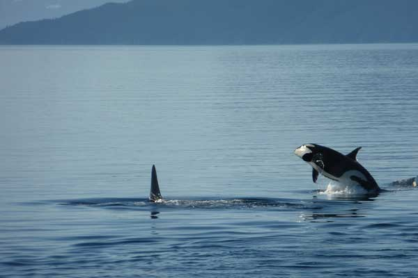 Cruise wildlife-rich fjords