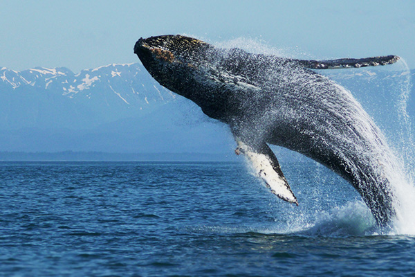 Humpback whales join in on your progress