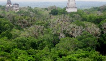 Views from one of the tallest temples in Tikal