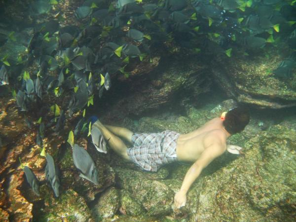 Snorkeling in schools of tropical fish.